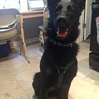 Adopt A Pet :: Naomi - Colorado Springs, CO