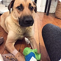 Adopt A Pet :: Sara - Manhasset, NY