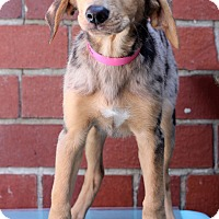 Adopt A Pet :: Isla - Waldorf, MD