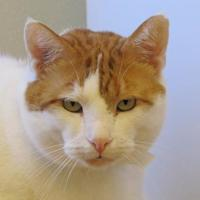 Adopt A Pet :: Charles - Woodstock, IL