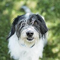 Adopt A Pet :: Lieutenant - Pueblo, CO