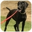Photo 3 - Pointer Mix Puppy for adoption in Santa Rosa, California - Valerie