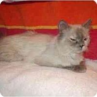 Adopt A Pet :: Jewell - Scottsdale, AZ