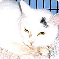 Adopt A Pet :: Clifford - Medway, MA