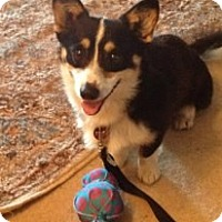 Adopt A Pet :: Martie - Stilwell, OK
