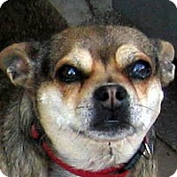 Adopt A Pet :: Ruby - Oakley, CA