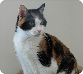 Calico Cat for adoption in Chambersburg, Pennsylvania - Esmeralda