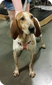 Coonhound Mix Dog for adoption in Alexis, North Carolina - Pippi
