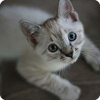 Adopt A Pet :: Jenner - Canoga Park, CA
