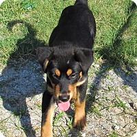 Adopt A Pet :: Stella - Edisto Island, SC