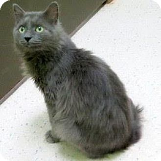 Domestic Mediumhair Cat for adoption in Janesville, Wisconsin - Jonsey