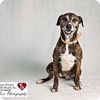 Adopt A Pet :: Lucy - North Myrtle Beach, SC