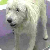 Adopt A Pet :: Cruz-ADOPTION PENDING - Boulder, CO