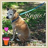 Adopt A Pet :: Regis - Ocala, FL