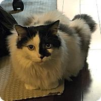 Adopt A Pet :: Macgyver - Toronto, ON