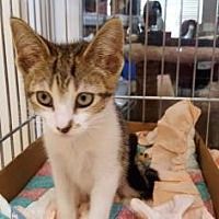 Adopt A Pet :: Jewel - Pompano Beach, FL