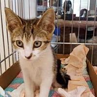 Adopt A Pet :: Jewel - Pompano Beach, FL