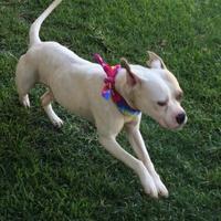 Adopt A Pet :: 28 - Mesquite, TX