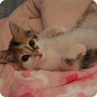 Adopt A Pet :: Tinker Bell - Mission Viejo, CA