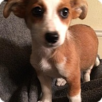 Adopt A Pet :: Charla - Boston, MA