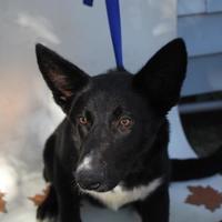 Adopt A Pet :: Biggy - Covington, LA