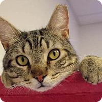 Adopt A Pet :: Zeus - Norwalk, CT