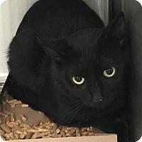 Adopt A Pet :: Bond - Seguin, TX