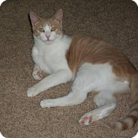 Adopt A Pet :: Toonces (Courtesy Post) - Montello, WI