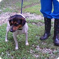 Adopt A Pet :: Babs - Rexford, NY