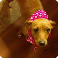 Adopt A Pet :: Cookie - south plainfield, NJ