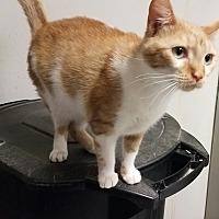Adopt A Pet :: Elsa - Indianola, IA