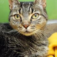 Adopt A Pet :: Tootsie - Largo, FL