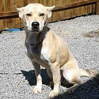 Adopt A Pet :: Priscilla - Cincinnati, OH