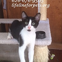 Adopt A Pet :: Brothers: OWEN (& Tucker) - Monrovia, CA