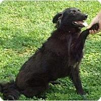 Adopt A Pet :: Abigale - Allentown, PA