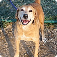 Adopt A Pet :: Redford - PENDING, in Maine - kennebunkport, ME