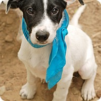 Adopt A Pet :: Rex - Homewood, AL