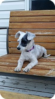 Terrier (Unknown Type, Small) Mix Dog for adoption in Calgary, Alberta - FRIDA