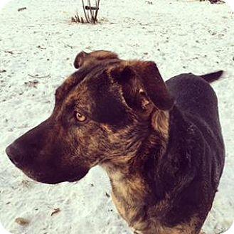 Rottweiler/Shepherd (Unknown Type) Mix Dog for adoption in Saskatoon, Saskatchewan - North