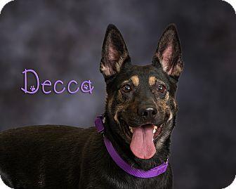Shepherd (Unknown Type)/Labrador Retriever Mix Dog for adoption in Somerset, Pennsylvania - Decka