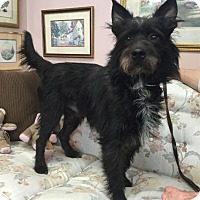 Adopt A Pet :: Manny*ADOPTEDt* - Chicago, IL