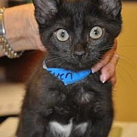 Adopt A Pet :: 27971789 - Pompano Beach, FL