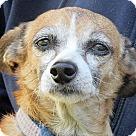 Adopt A Pet :: Lucie