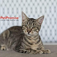 Adopt A Pet :: Simon - Columbus, OH