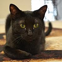 Adopt A Pet :: Hercules - McKinney, TX