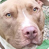 Adopt A Pet :: Denim - Cleveland, OH