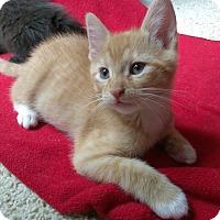 Adopt A Pet :: Apricat - Duluth, GA