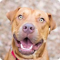Adopt A Pet :: Moose - Elkton, FL