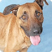 Adopt A Pet :: Ginger - Encinitas, CA