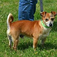 Adopt A Pet :: Trevor - Akron, OH